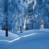 Обичам зимата