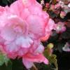 Моята градина и цветя
